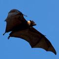 0911-Bat-120x120.jpg