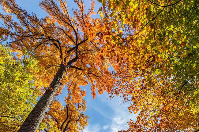 Orange and yellow trees